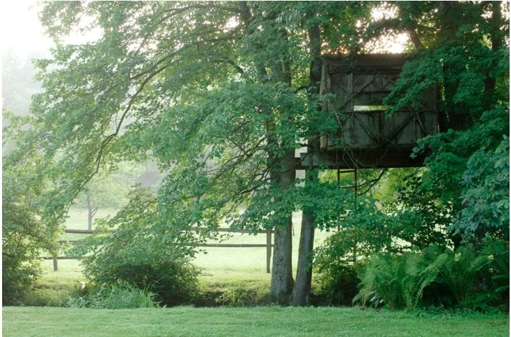 Home Sweet Treehouse | The American Spectator on