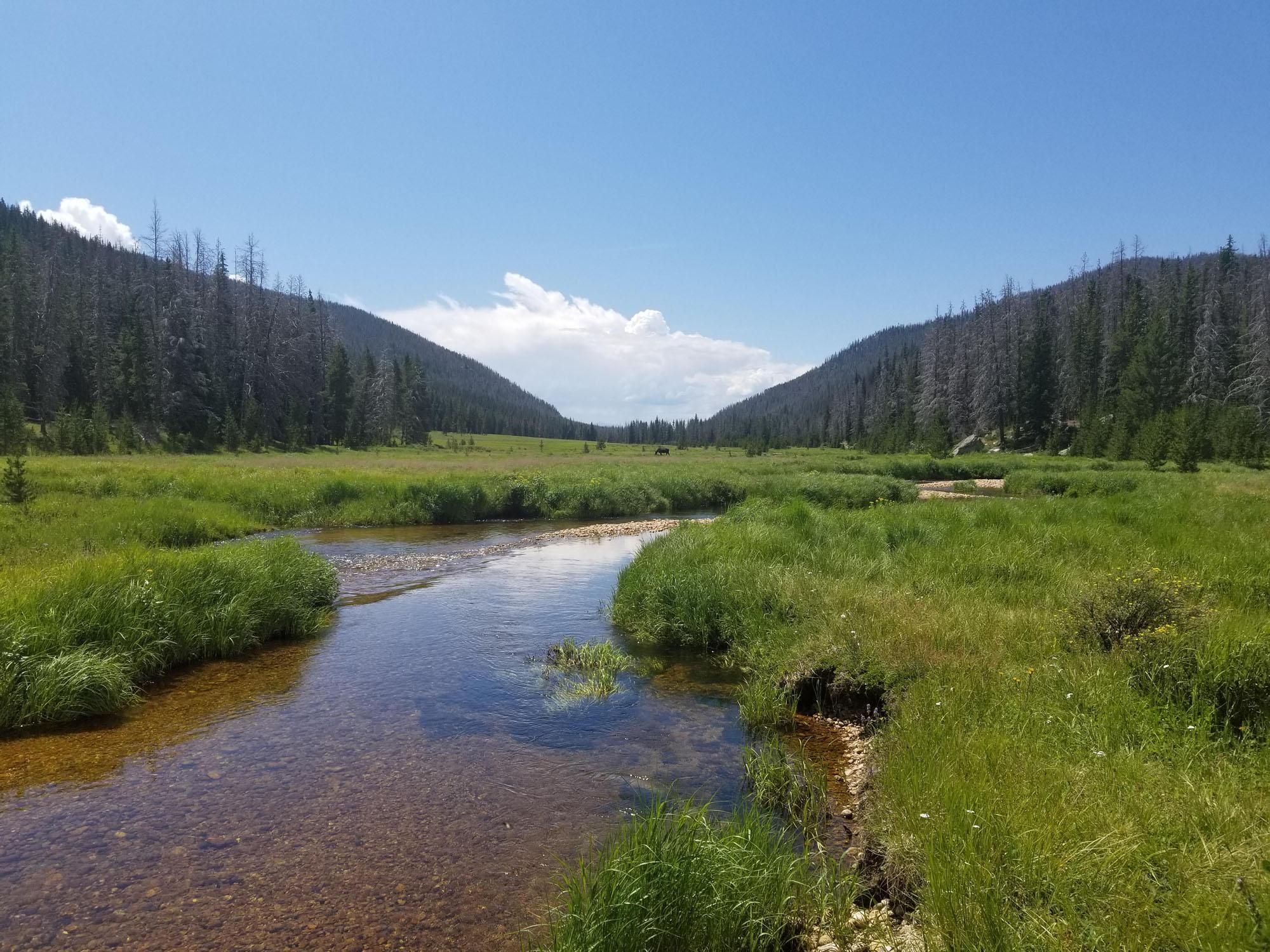 Big Meadows, Colorado